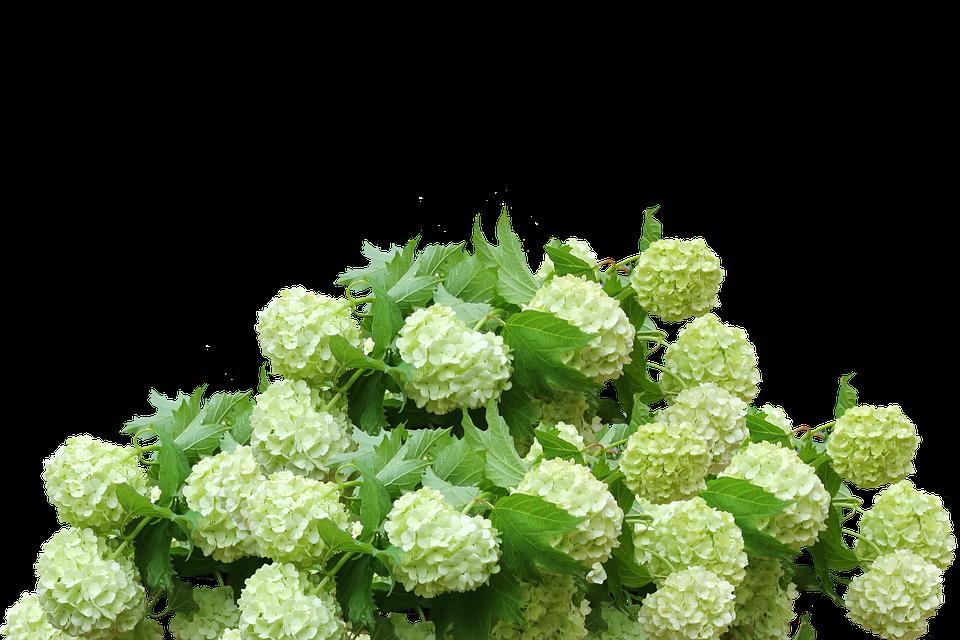 Velduftende plante