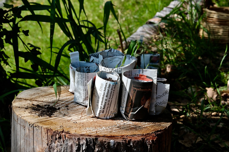 Planter i avispotter i have