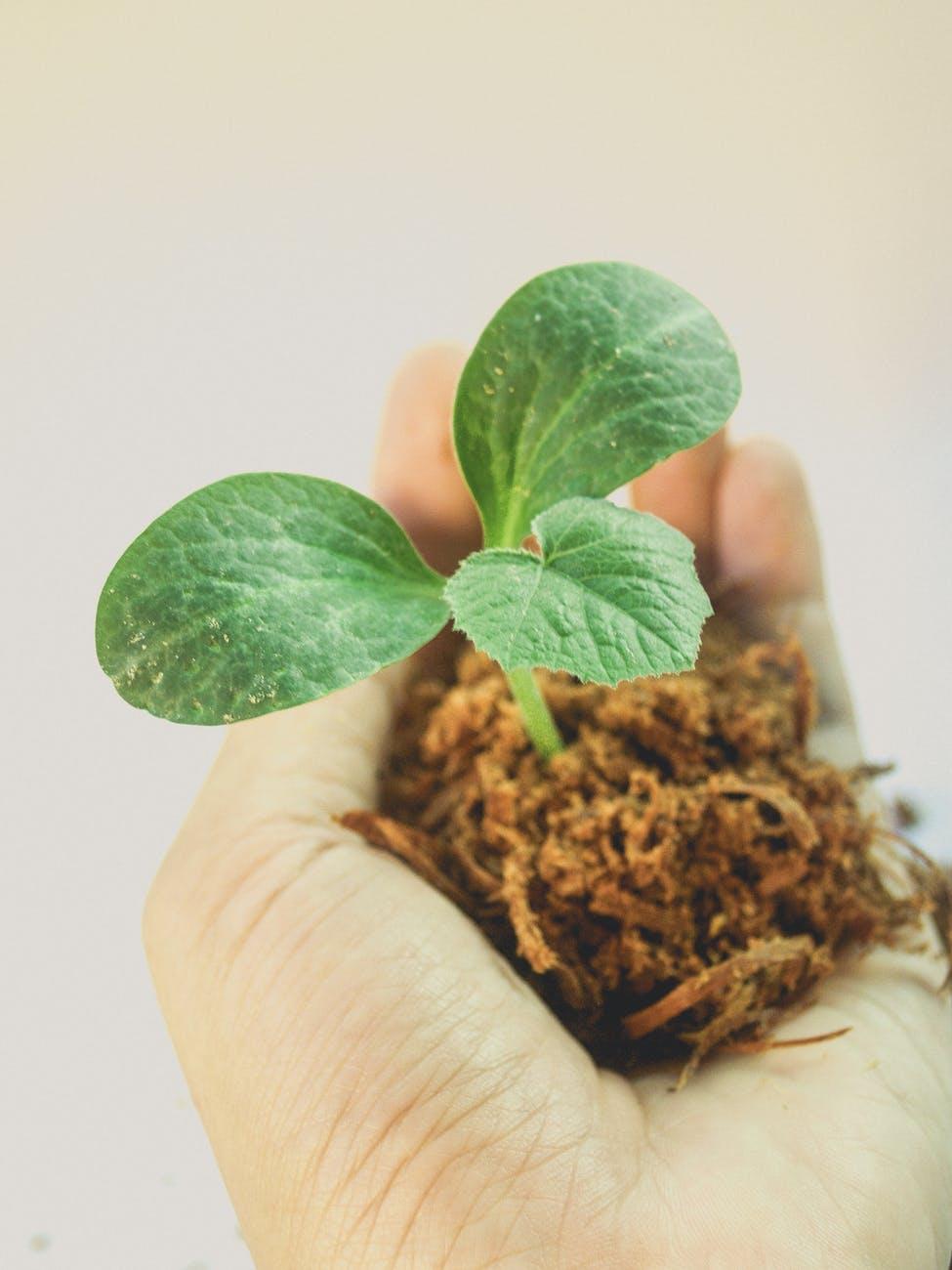 plante i hånd